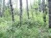rs Ness Creek (17)